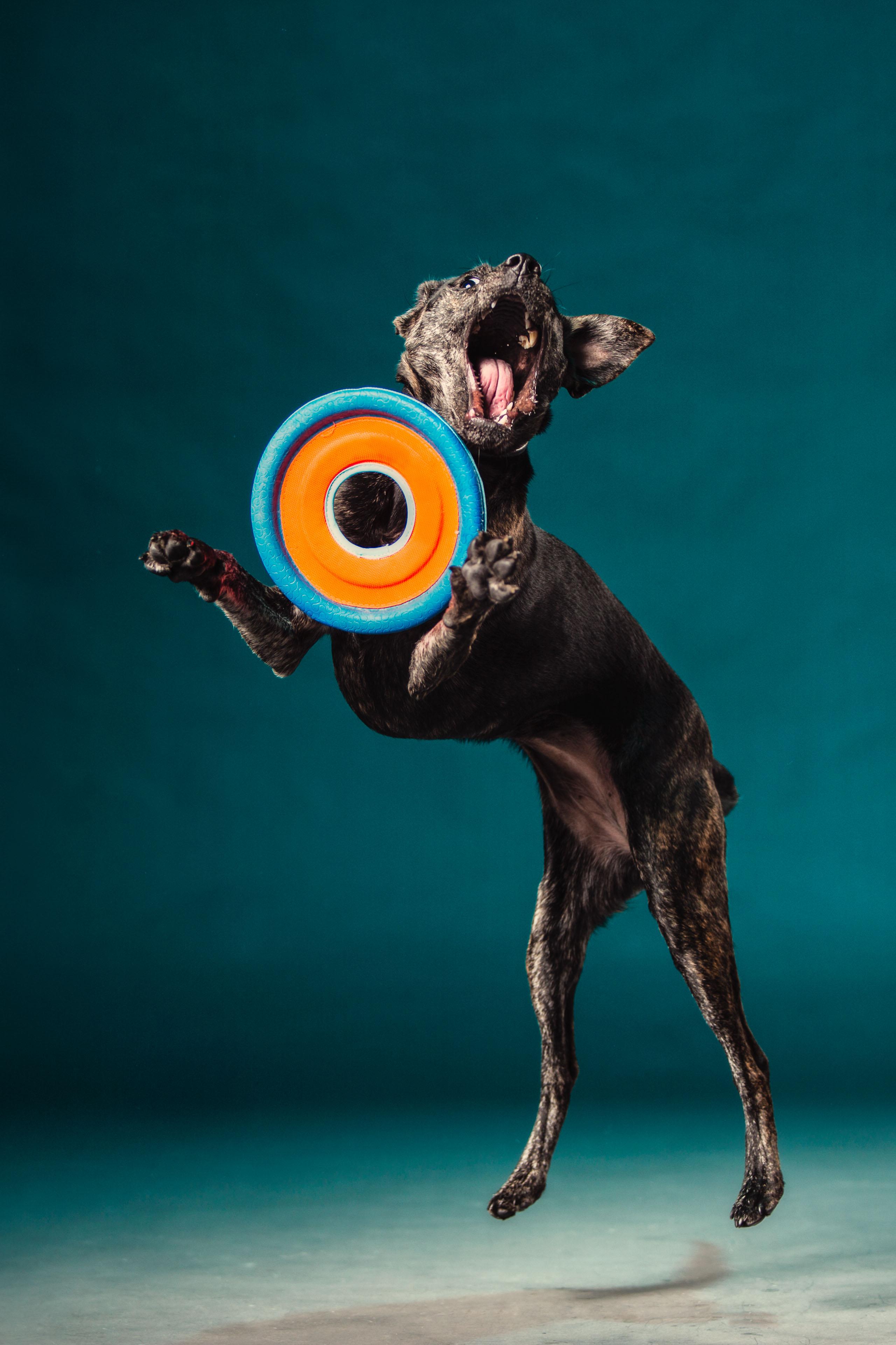 Kona frisbee